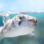 okinawa, photo, japan, ocean, fish