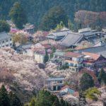 Yoshino mountain Japan village sakura cherry blossom