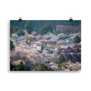 poster japon sakura